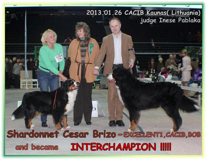 Shardonnet Cesar Brizo- Interchampion !!!